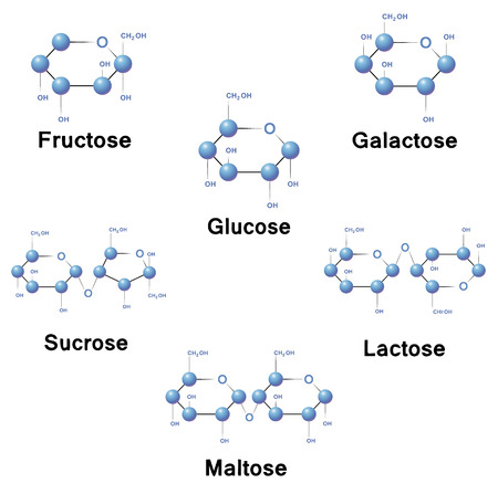 disaccharide: Sugar molecule strucure, biochemistry, chemistry, vector illustration.
