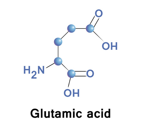 synthesis: Glutamic acid, vector.