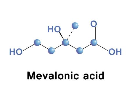 중요: Mevalonic acid (mevalonate) is a key organic compound in biochemistry, and is of major pharmaceutical importance. Vector medical illustration.