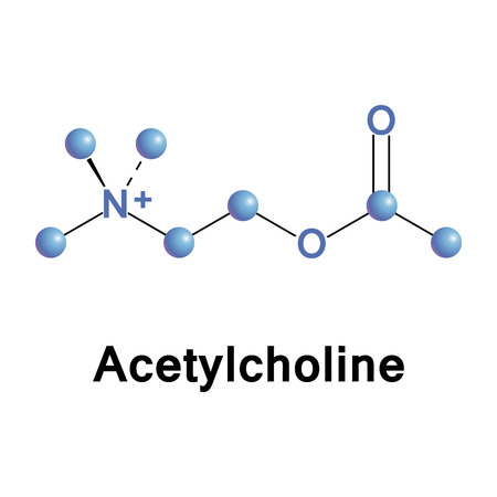Acetylcholine is an organic chemical that functions in the brain and body as neurotransmitter, vector illustration of molecular model.