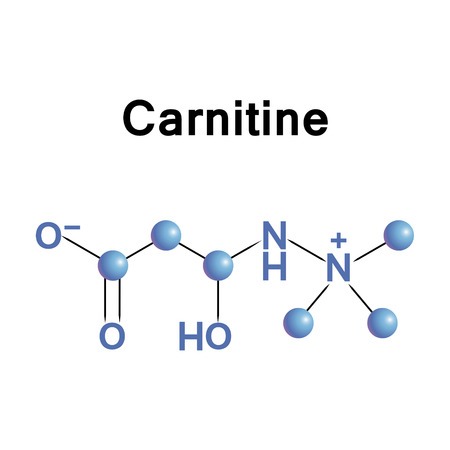 Carnitine is an amino acid derivative and nutrient involved in lipid (fat) metabolism in mammals and other eukaryotes. Illustration
