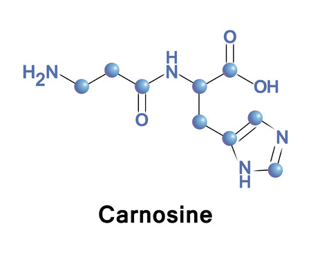 acids: Carnosine, beta-alanyl-L-histidine, is a dipeptide molecule, made up of the amino acids beta-alanine and histidine. It is highly concentrated in muscle and brain tissues.