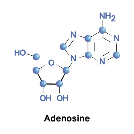 purine: Adenosine is a purine nucleoside composed of a molecule of adenine attached to a ribose. It plays a role in biochemical processes, such as energy transfer as well as in signal transduction cAMP.