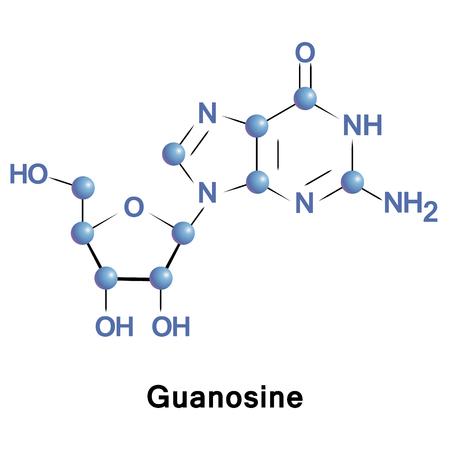 Guanosin ist ein Purin-Nukleosid, umfassend Guanin und Ribose. Es dauert in der Synthese von Nukleinsäuren und Proteinen, die Photosynthese, Muskelkontraktion und intrazelluläre Signaltransduktion Teil Standard-Bild