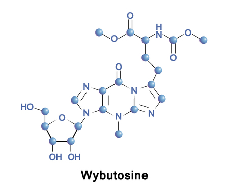 synthesis: Wybutosine is a heavily modified nucleoside of phenylalanine transfer RNA that stabilizes interactions between the codons and anti-codons during protein synthesis. Stock Photo