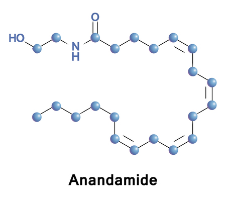 amide: Anandamide, or AEA, is a fatty acid neurotransmitter derived from the non-oxidative metabolism of arachidonic acid an essential omega-6 polyunsaturated fatty acid