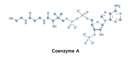 Coenzyme A is a coenzyme acts in the synthesis and oxidation of fatty acids, and the oxidation of pyruvate in the citric acid cycle. All genomes encode enzymes that use coenzyme A as a substrate. Stock Photo