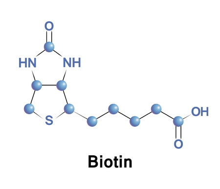 Biotin is a vitamin B7. It is a coenzyme for carboxylase enzymes, involved in the synthesis of fatty acids, isoleucine, and valine, and in gluconeogenesis.