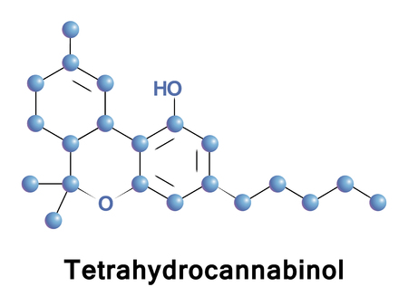 Tetrahydrocannabinol is the principal psychoactive constituent or cannabinoid of cannabis. THC in Cannabis is assumed to be involved in self-defense, perhaps against herbivores Ilustração