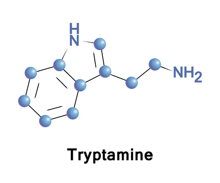 found it: Tryptamine is a monoamine alkaloid. It contains an indole ring structure, and is structurally similar to the amino acid tryptophan. It is found in trace amounts in the brains of mammals