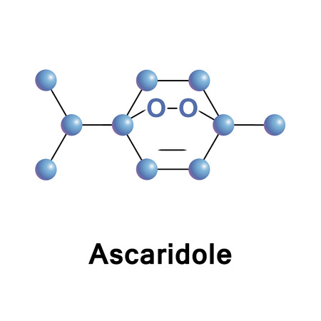 Ascaridole is a bicyclic monoterpene that has an unusual bridging peroxide functional group. It is used as an anthelmintic drug that expels parasitic worms from plants, domestic animals and the humans Stock Photo