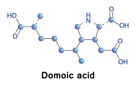 Domoic acid is a kainic acid analog neurotoxin that causes amnesic shellfish poisoning. It is produced by algae and accumulates in shellfish, sardines, and anchovies. Stock Photo
