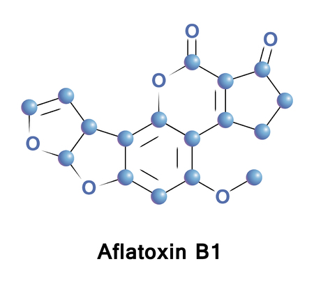mildew: Aflatoxin B1 is an aflatoxin produced by Aspergillus flavus and A. parasiticus. It is arguably the most potent carcinogen known, and is up to twice as carcinogenic as an equitoxic dose of X-rays.