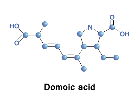 asp: Domoic acid is a kainic acid analog neurotoxin that causes amnesic shellfish poisoning. It is produced by algae and accumulates in shellfish, sardines, and anchovies. Stock Photo