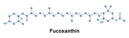 found it: Fucoxanthin is a xanthophyll, with formula C42H58O6. It is found as an accessory pigment in the chloroplasts of brown algae and most other heterokonts