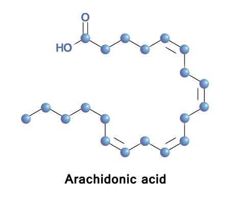 Arachidonic acid is a polyunsaturated omega-6 fatty acid. It presents in the phospholipids of membranes of the bodys cells, and is abundant in the brain, muscles, and liver Illustration