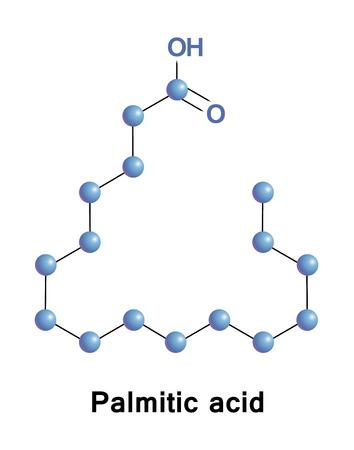 Resultado de imagen para acidos grasos palmitico