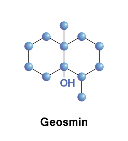 Geosmin is an organic compound with a distinct earthy flavor and aroma produced by a type of Actinobacteria.