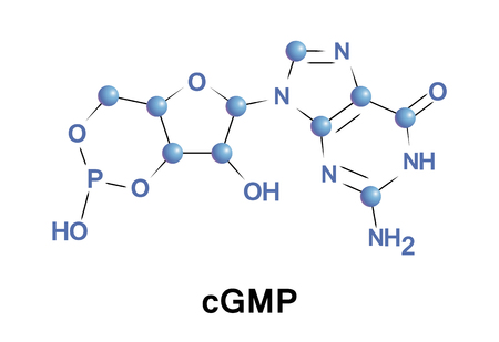 Cyclic guanosine monophosphate is a cyclic nucleotide derived from guanosine triphosphate. cGMP acts as a second messenger much like cyclic AMP