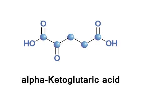 Alpha-Ketoglutaric acid Illustration