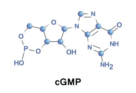 Cyclic guanosine monophosphate