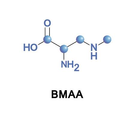 Beta-Methylamino-L-alanine, or BMAA, is a non-proteinogenic amino acid produced by cyanobacteria.