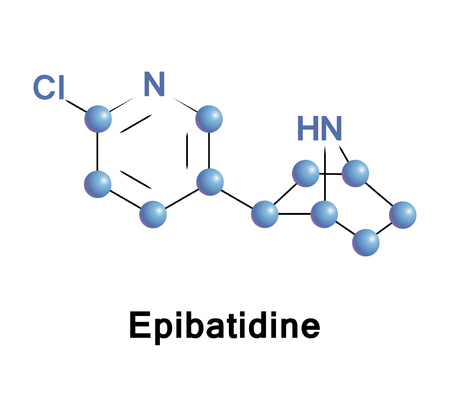 Epibatidine is a putative alkaloid. Its toxicity stems from its ability to interact with nicotinic and muscarinic acetylcholine receptors