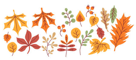 autumn set. Multicolored and differently shaped leaves, branches and berries on a white background. For autumn design and decoration, print. Vector Illustration
