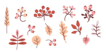 Cozy autumn. Colored set of decorative autumn drawings. Harvest - Various leaves, twigs and berries. Use for fall design and decoration. Vector. Isolated objects on white background