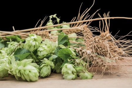 hops and wheat on the table 写真素材