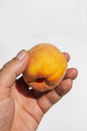 peach fruits in hand in the garden in summer