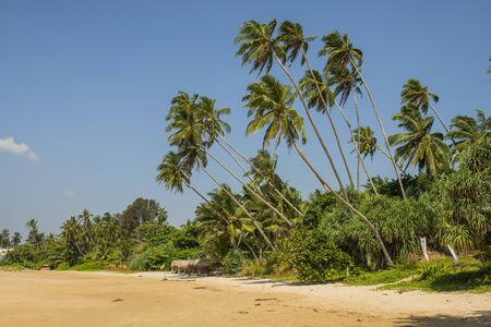 ocean side beach with palm trees and sand Banco de Imagens