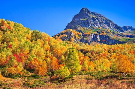 frondage: in the Caucasus mountains, Arhiz region, Russia