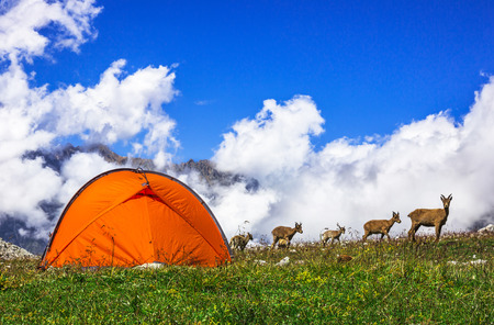 Mountain goats beside the orange touristic tent. Picture was taken during a trekking hike in the  stunning Caucasus mountains, Bezengi region, Kabardino-Balkaria, Russia Imagens