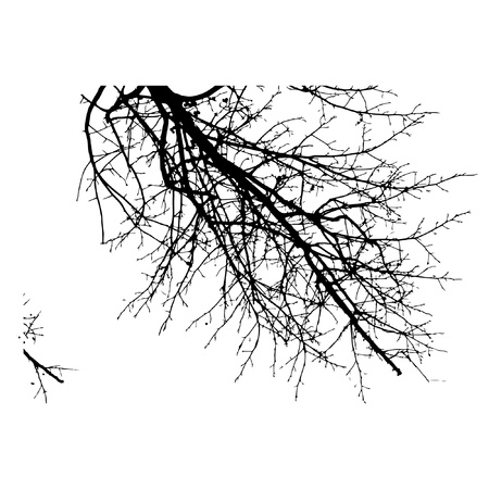 Black trees isolated on white background. Vector  illustration. Ilustração