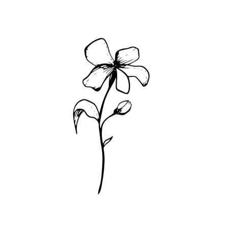 Single hand drawn flower on the white background. Doodle vector illustration Isolated . Modern Design Botanical elements for invitation, wedding greeting cards, announcements. Herbs. Outline art