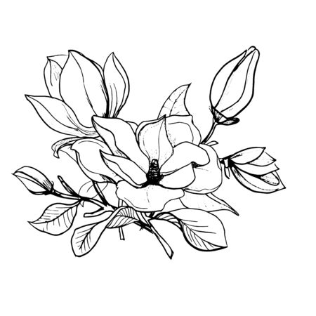 Blossom of Magnolia. Hand draw sketch. Outline bunch of Flowers and leaves isolated on the white background. Floral element Design for wedding, greeting, inviting cards, Black and white. Vector