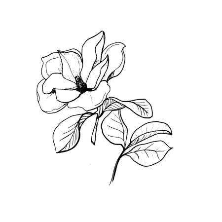 Blossom of Magnolia. Hand draw sketch. Outline Flower and leaves isolated on the white background. Floral element Design for wedding, greeting, inviting cards, Monochrome. Black and white. Vector