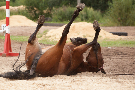 the horse, horse rides on the ground and to sawdust head over heels