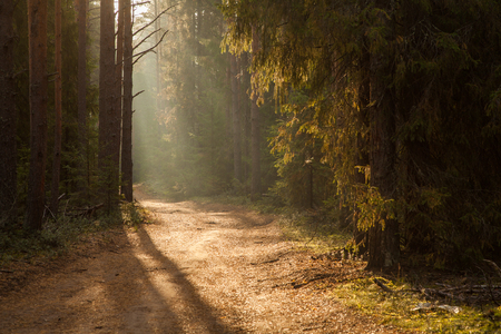 thick mist in coniferous forest. Morning landscape in summer thick fog. dense fog in the morning. early morning. forest hiding in the fog. thick mist in coniferous forest. Morning landscape in summer thick fog. dense fog in the morning. early morning. forest hiding in the fog.