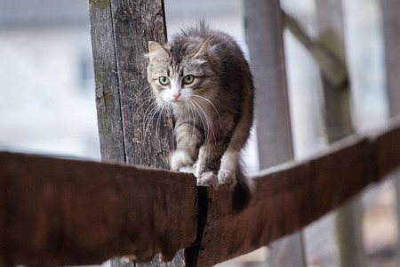 the mistrustful cat sits on a porch and lours