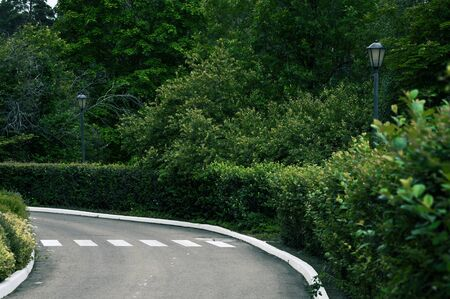 A road with a painted pedestrian crossing making a turn surrounded by a green garden