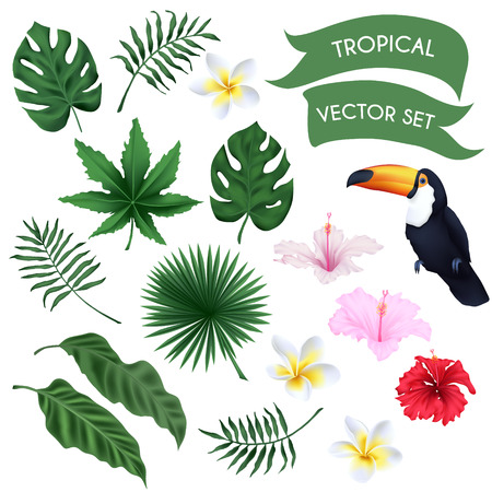 flower leaf: Vector tropical set - leaves, flowers and toucan Illustration