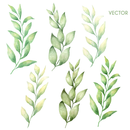 Vector hand drawn watercolor  leaves set isolated on white.