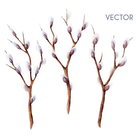 willow tree: Hand drawn vector watercolor spring willow tree branches set isolated on white. Twigs with buds