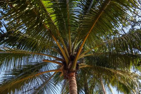 Palm tree above blue sky low angle view