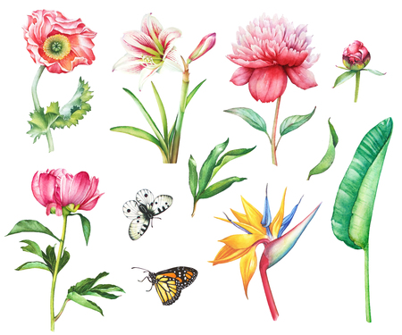 Watercolor hand drawn summer set of flowers and butterflies apollo and monarch. Poppy, peony, strelizia and amaryllis flowers with stem and leaves.