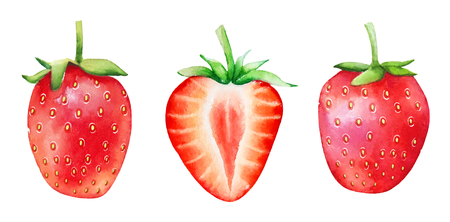 Set of watercolor hand drawn strawberry fruits isolated on white background.