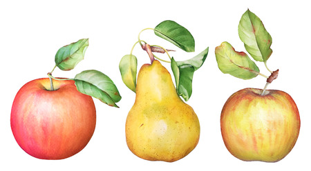 Collection of hand drawn watercolor apples and a pear fruit with green leaves isolated on white background.