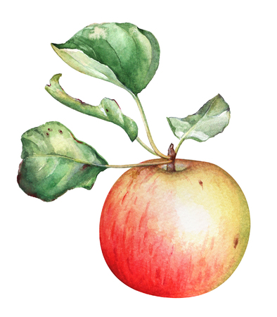 Ripe red apple with green leaves on white background